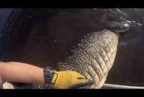 Охотник поймал крокодила