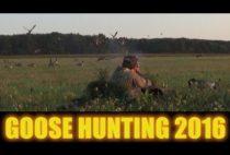 Охотники в засидке на поле