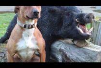 Собака возле кабана