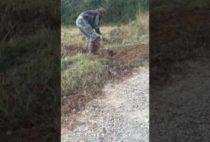 Охотник достает волка из капкана