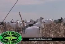 Охотники на поле