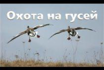 Гуси летят над полем