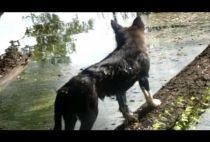 Собака на бревне