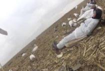 Техасские охотники поджидают гусей