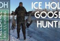 Охота на гуся на видео