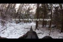 Шведский охотник на номере