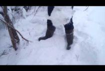 Охотник проверяет петли на зайца