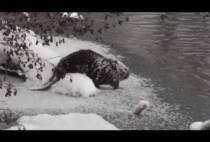 Бобр на берегу реки