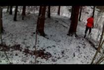 Охотник подходит к косули