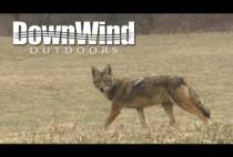 Волк на поле